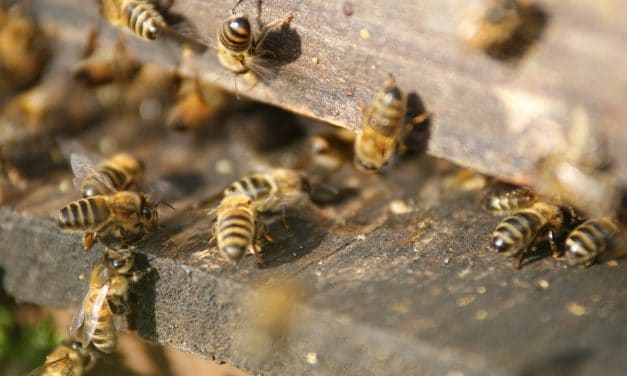 Honeybees just experienced a record winter die-off