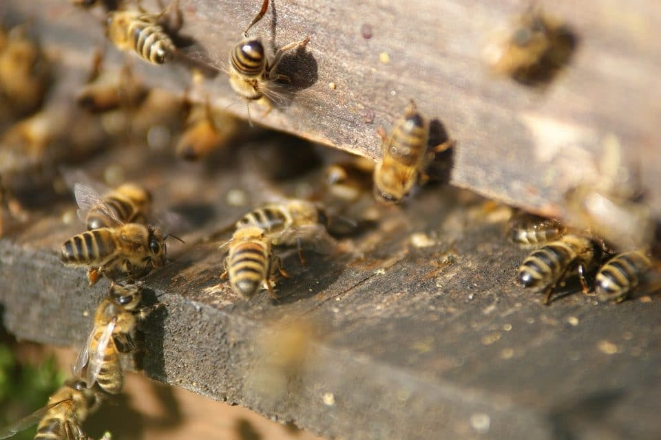 Honeybees just experienced a record winter die-off