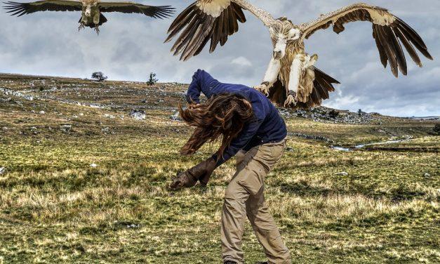 Bird Attacks Are Turning Violent This Summer