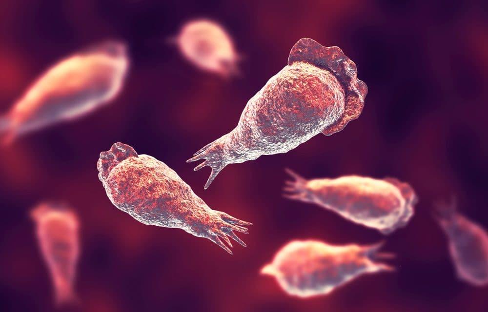 Swimmer dies from rare brain-eating amoeba at North Carolina water park