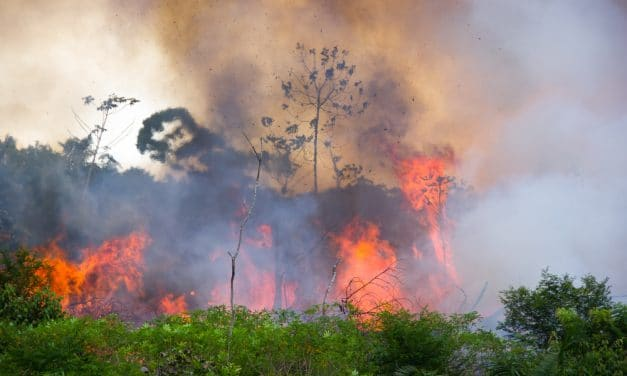 DEVELOPING: Deadly fires are scorching the Amazon Rainforest