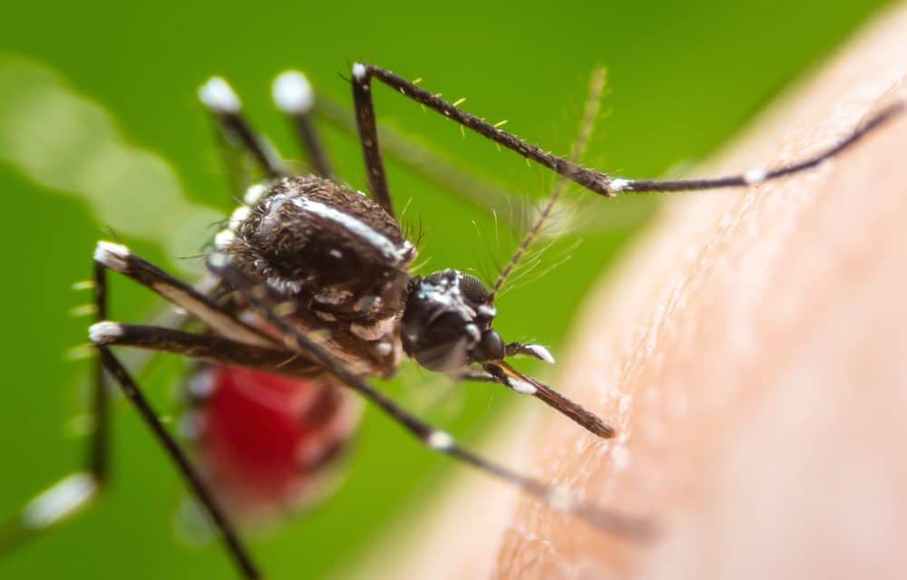 Potentially fatal mosquito-borne virus detected in Delaware