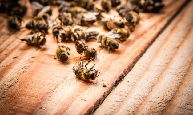 More than half a billion bees dropped dead in Brazil within 3 months