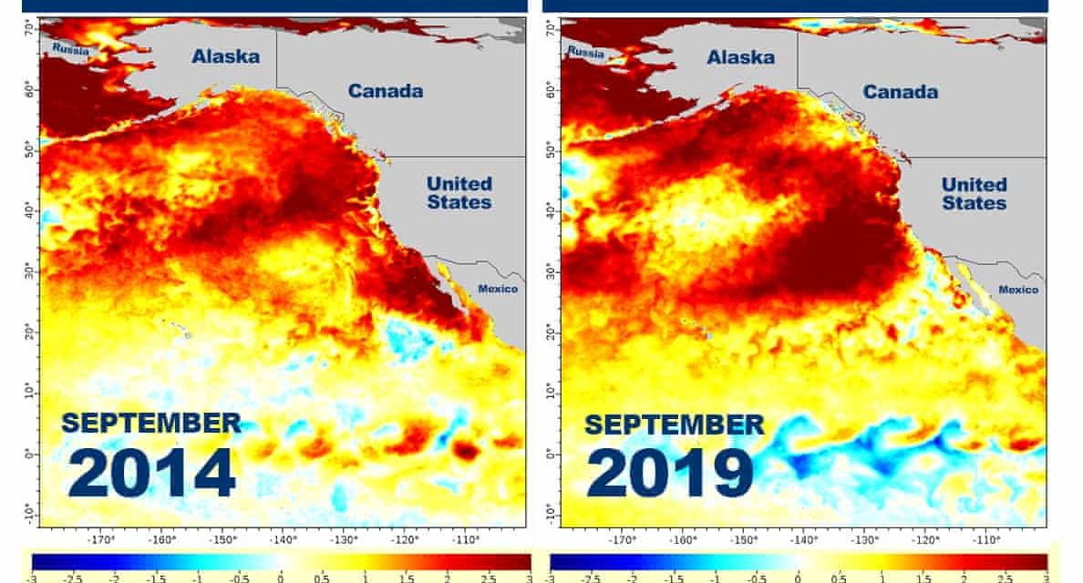 """Temperatures In The Pacific Ocean Have Shot Up To Dangerous Levels, And Scientists Are Blaming A """"Strange Anomaly"""""""