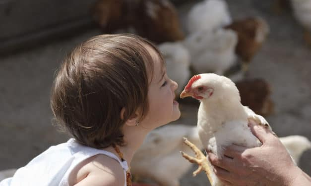CDC warns people not to kiss chickens