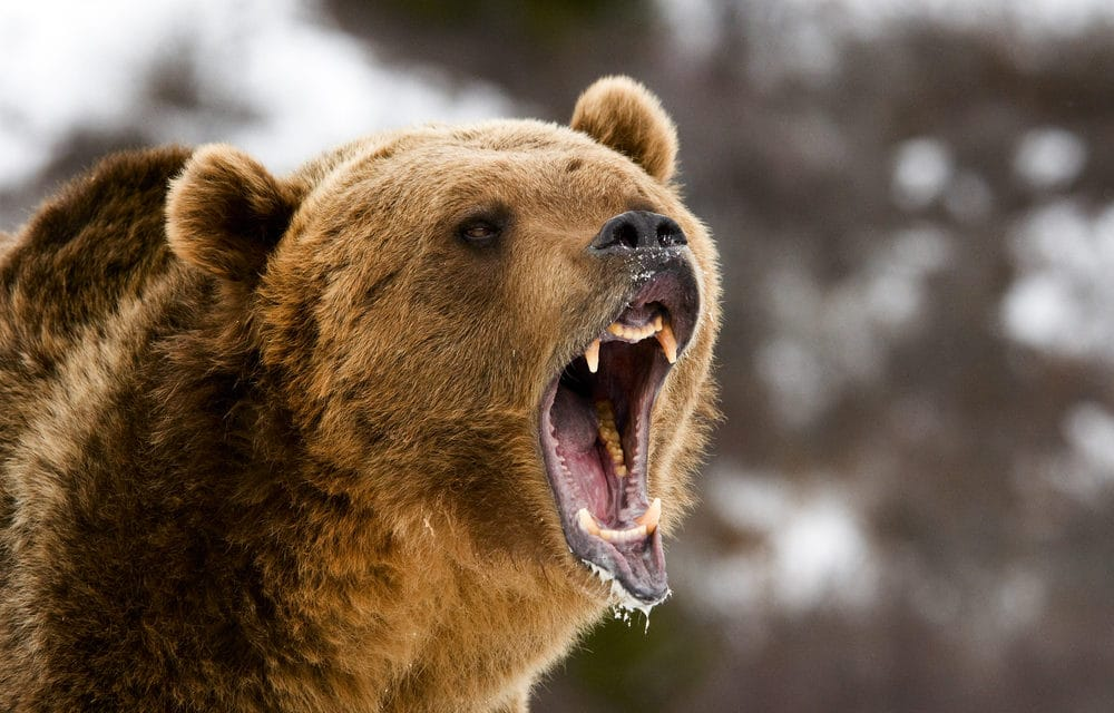 Bear Attacks Woman at Bible Camp, She Prays, Then Gets Lifted 'as if by an Angel'