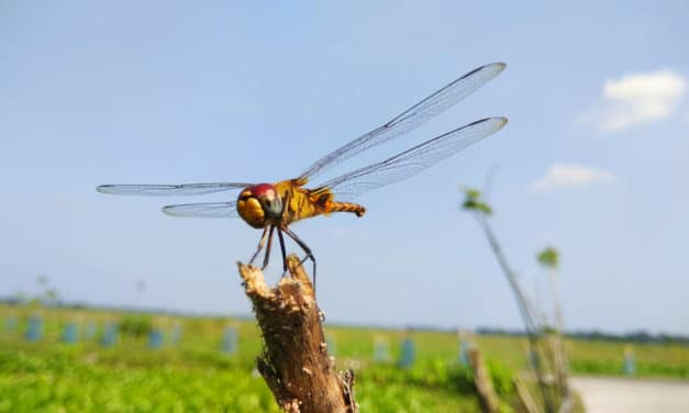 Massive swarms of dragonflies in 3 states picked up on weather radar