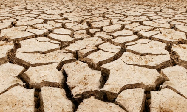 Worst drought in 60 years kills at least 106,000 farm animals in Chile