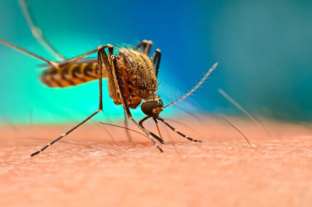 First case of dengue spread by sex confirmed in Spain