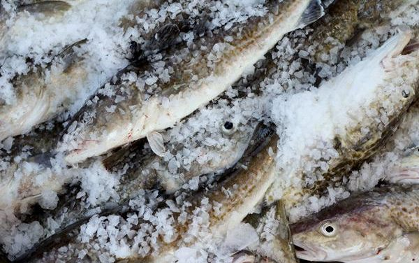 Massive fish and bird die offs cause Gulf of Alaska fishery to close for the first time ever