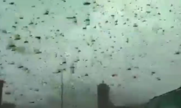 Apocalyptic locust swarm stops traffic as sky turns black in terrifying footage