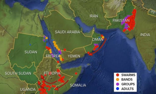 Locusts Multiply by the Millions, Plague Spreads Beyond Africa to China, Could Be Greater in Months