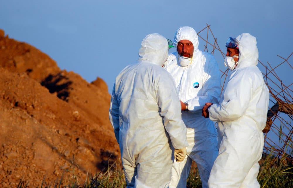 Saudi Arabia reports outbreak of highly pathogenic bird flu virus