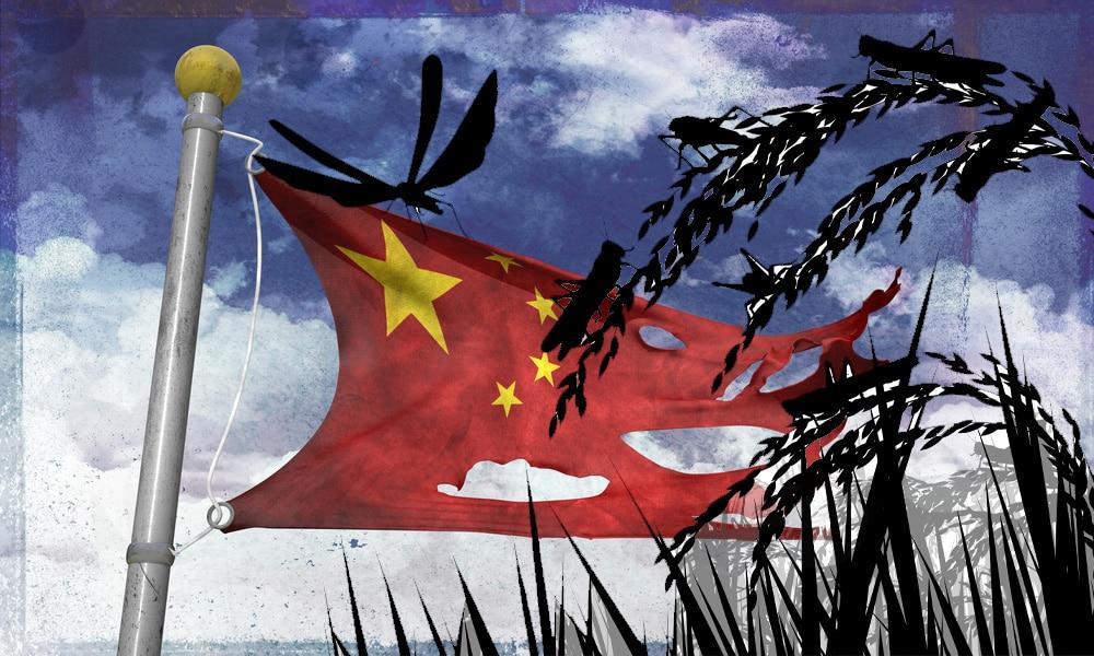 Apocalyptic Locust Plague Reaches Virus Infected China