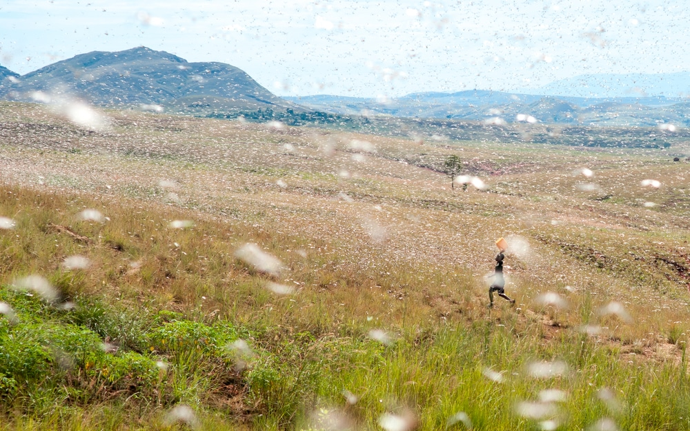 Jordan, Somalia and Pakistan Declare National Emergency Over Locust Swarms