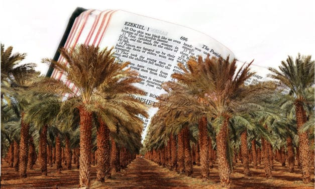 Date Tree Grown From 2,000-Year-Old Seeds Fulfilling Prophecy Of Ezekiel