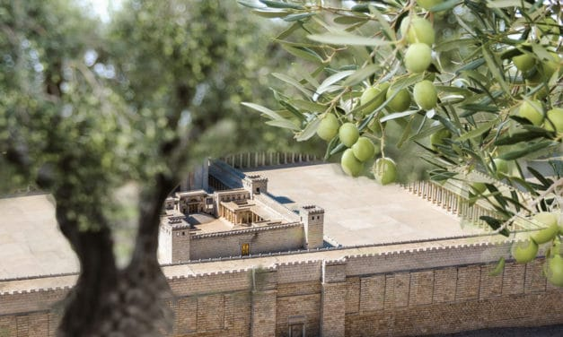 Sanhedrin Gets Authorization to Use Their Trees for Third Temple