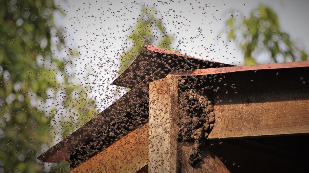 Swarm of killer bees sting dogs to death in Arizona