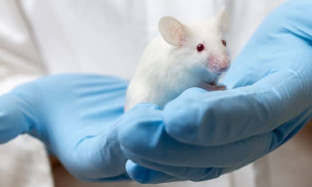Human-Mouse Chimera Created With Highest Number of Human Cells Ever Recorded