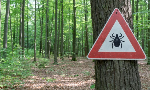 """Russia invaded by blood-sucking ticks including new and deadly """"mutant"""" species"""