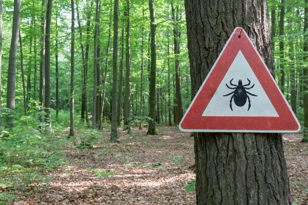 "Russia invaded by blood-sucking ticks including new and deadly ""mutant"" species"