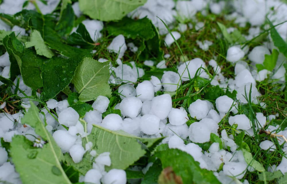 Deadly Hailstorm Destroys Crops In Western MN Causing Loss Millions Of Dollars
