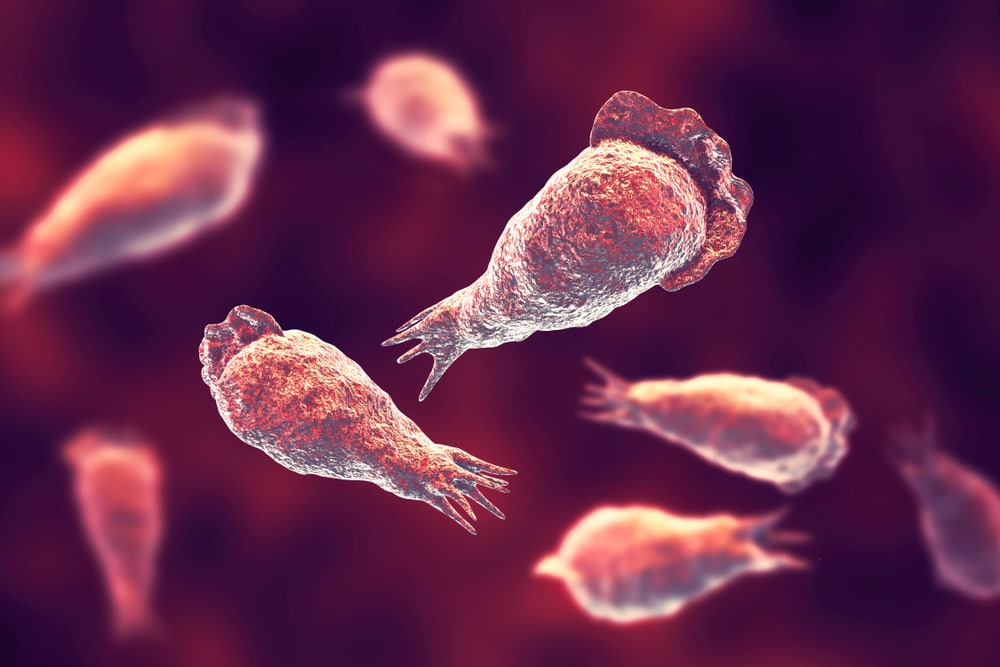 Rare case of brain-eating amoeba confirmed in Tampa Florida