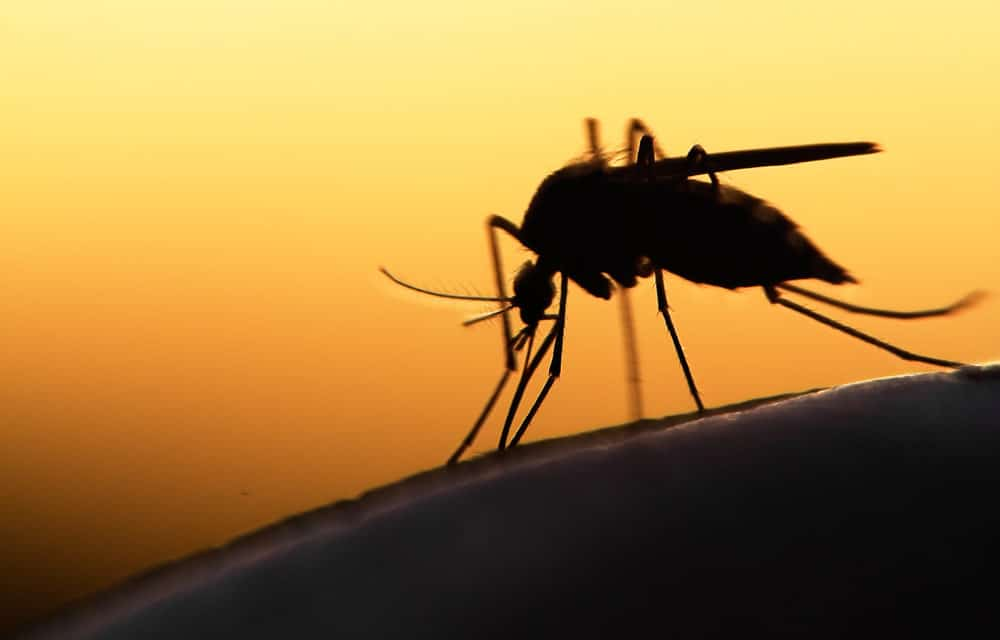 750 million genetically engineered mosquitoes has just been approved for release in Florida Keys