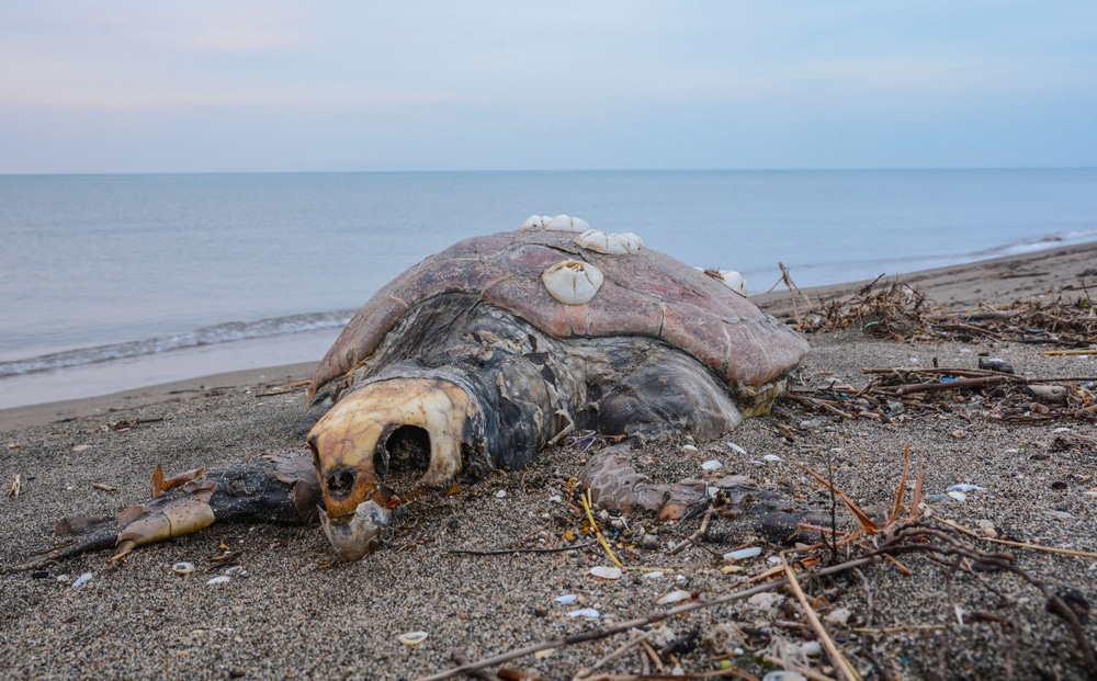 351 sea turtles found dead in 6 months on same coast where 137 sea lions died in Mexico
