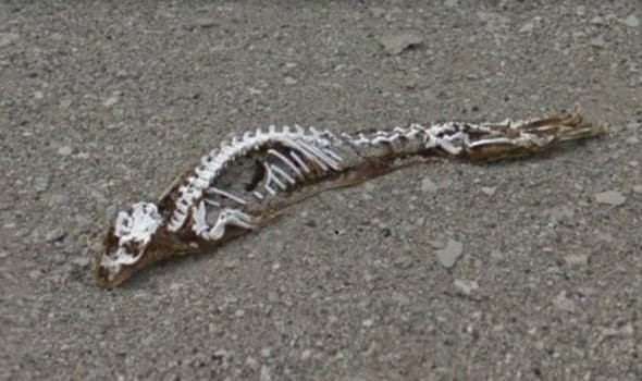 Melting ice uncovers huge remains of 'mystery creature' on Google Maps