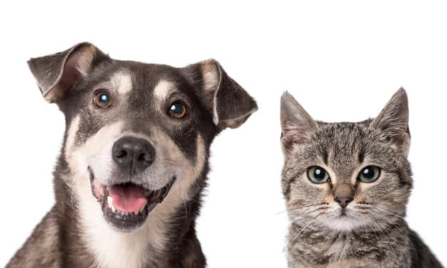 Scientists warn Cats and dogs may need to get Covid vaccine to stop spread of virus