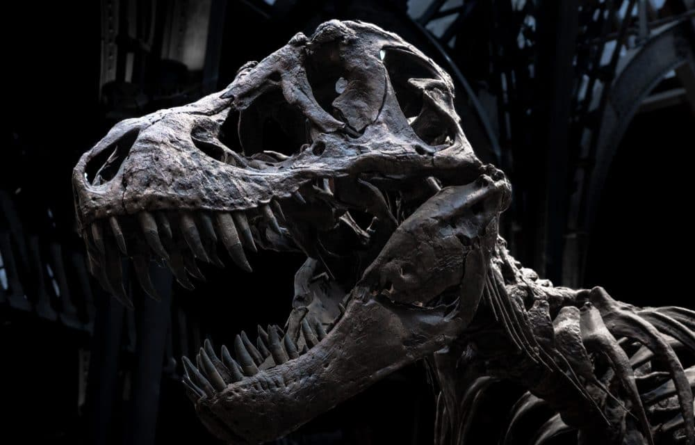 """Elon Musk's Neuralink claims to possess the technology to build a real """"Jurassic Park"""""""
