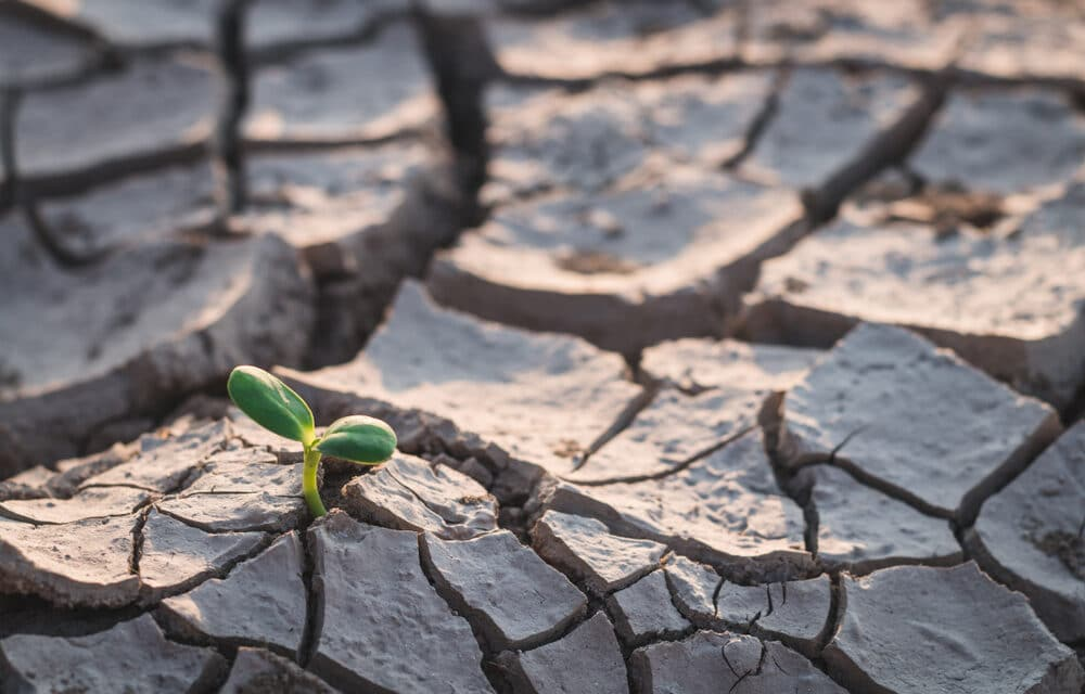 Drought gripping America on track to become worst in 1,200 years.