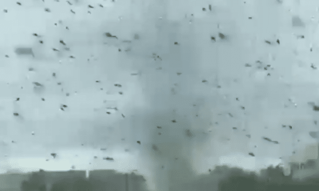 Tornado of mosquitoes blot out the sun in Russia