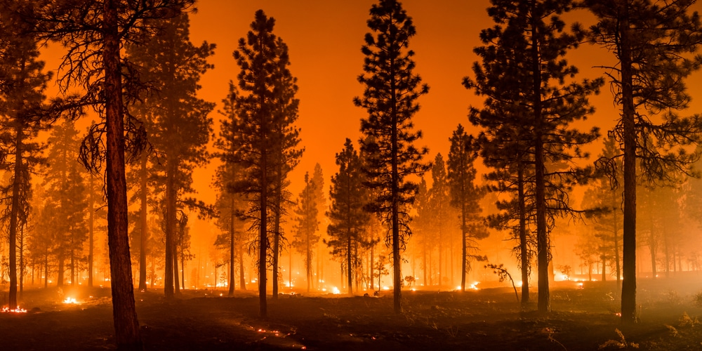 Now the West is dealing with wildfires in the midst of ongoing deadly heat wave and drought…