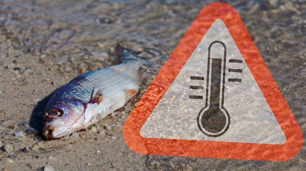 Deadly heat wave continues to rip through the Pacific Northwest endangering countless animals in its path