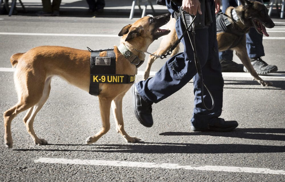 Boston unveils COVID-Sniffing Police K-9s for use at schools, town buildings, nursing homes, public safety facilities, and medical facilities