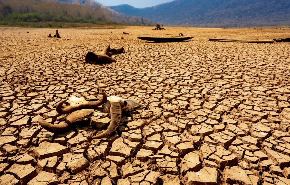 Extreme drought in Northern Mexico has killed tens of thousands of cattle