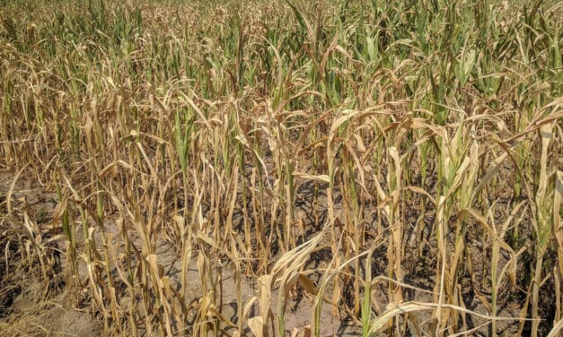 Drought worsens, Inventories of grains worldwide are dwindling, pushing inflation for corn and wheat